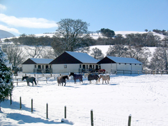 Snowy scene at the Happy Horse Retirement Home